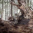 A Woodland Throne by Mikell Herrick