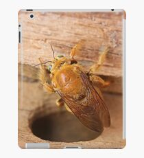 Golden Carpenter Bee iPad Case/Skin