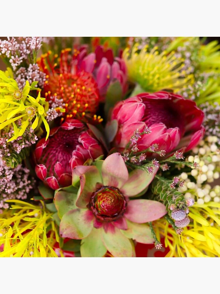 Protea Design in South Africa by MargueriteFaure