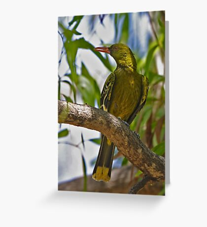 Yellow Oriole Greeting Card