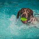 Freckles swimming by Leon Herbert