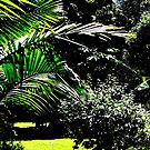 """""""This light of palms, will shine"""" by Norma-jean Morrison"""