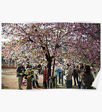 yoyogi park blossom Poster