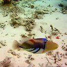 Maldivian Reef Fish by David McGilchrist