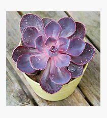 Purple Pearl Photographic Print