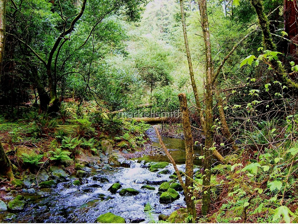 Muir Woods Creek  by markellsmith