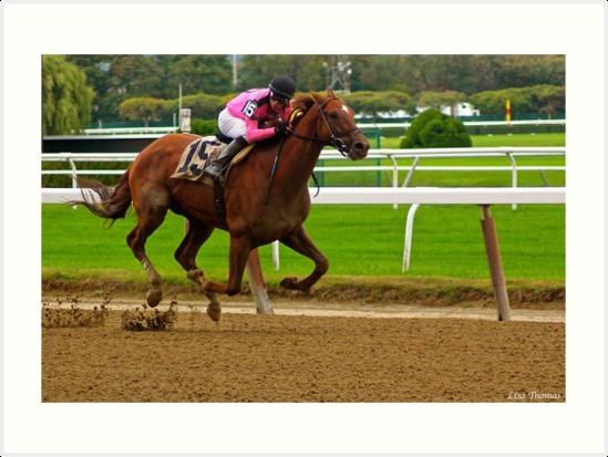 Race Horse Belmont Park, New York by LisaThomasPhoto