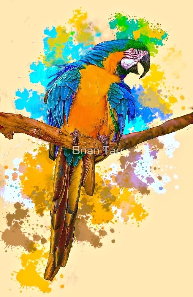 Macaw by Brian Tarr