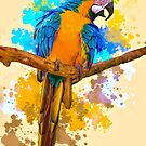 Macaw by Brian Tarr