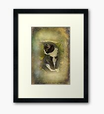 Tuxedo Cat Wearing Spats Framed Print