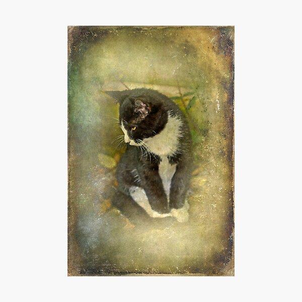 Tuxedo Cat Wearing Spats Photographic Print