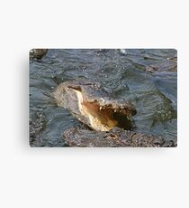 Alligator Action Canvas Print