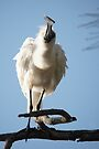 Royal Spoonbill ~ Natures high speed screw driver by Robert Elliott