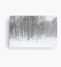 winter snowstorm Canvas Print