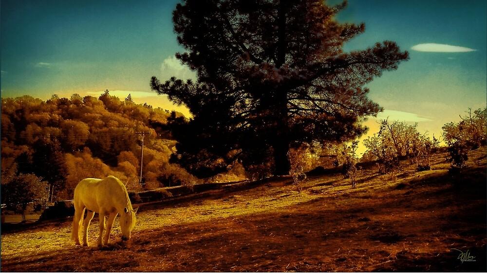 California Springtime Landscape by moorezart