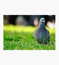 The Bird Photographic Print