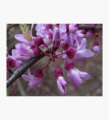 Newness of Spring Fotodruck