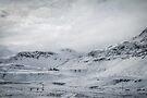 Whitescape by Evelina Kremsdorf