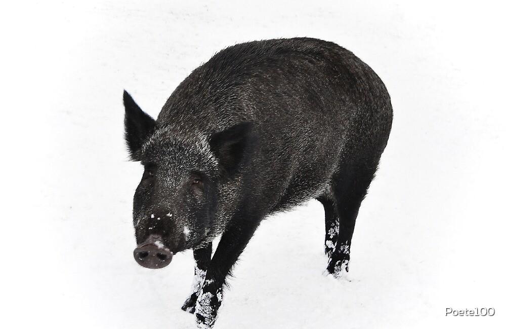 Oink Oink by Poete100