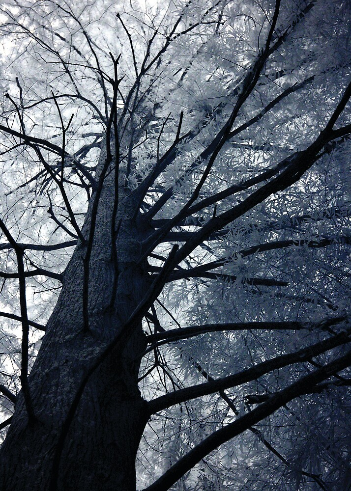 The Tree that Looms over all of us by andrew nuckols