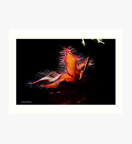 STAPELIA GIGANTEA - Giant carrion flower - REUSE AASBLOM Art Print