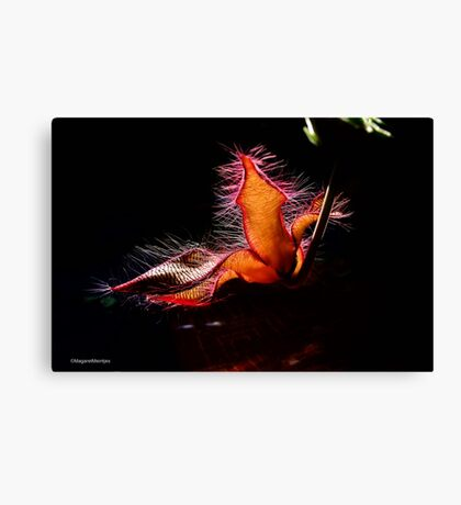 STAPELIA GIGANTEA - Giant carrion flower - REUSE AASBLOM Canvas Print