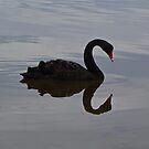 'Crab'by Swan - Adventure Bay, Bruny Island, Tasmania by PC1134