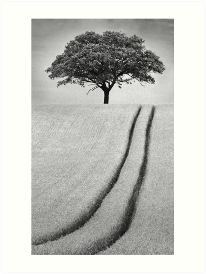 The Tree by Patricia Jacobs DPAGB BPE4