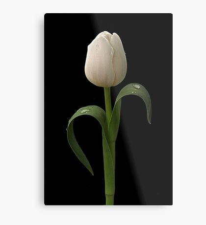 White Tulip Metal Print