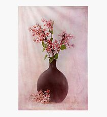 Study In Pink Photographic Print
