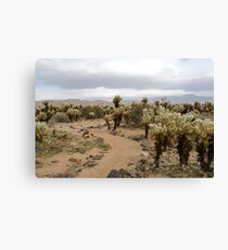 Cactus footpath Canvas Print