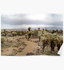 Cactus footpath Poster