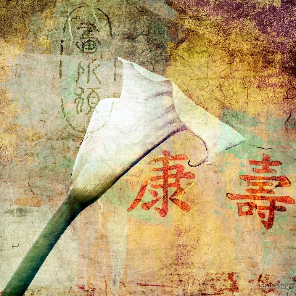 Lily Calligraphy by Elena Ray