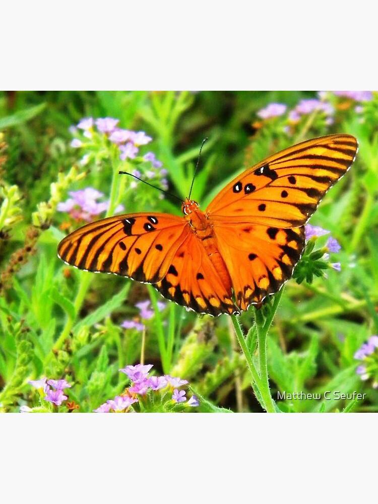 Orange Butterfly Windows From Heaven by windowsfromheav