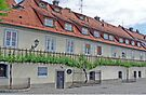 """The """"Old Vine"""" in Maribor by Graeme  Hyde"""