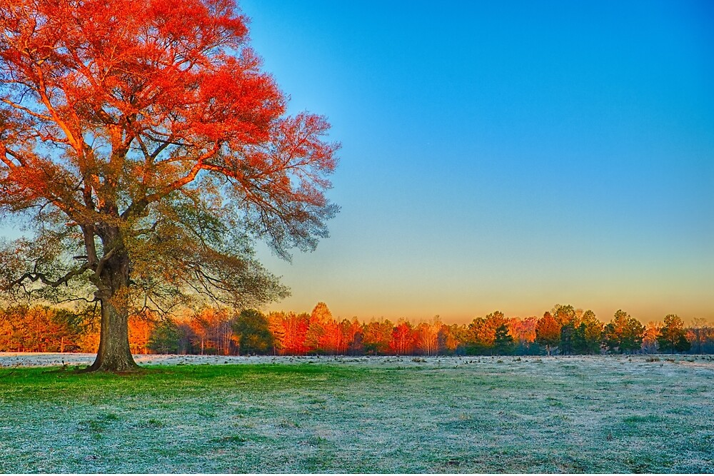 morning frost farmscape by ALEX GRICHENKO