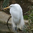 White Beautiful Bird by billiebowler