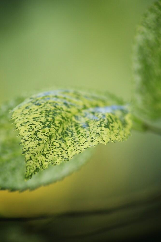 Gentle Green  by WobblyWombat