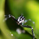 Little Blue Spider by cathywillett