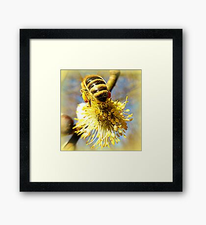 Bees Bum Framed Print