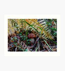 scaber stalk ~ Leccinum aurantiacum ~ Art Print