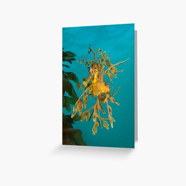 Leafy Seadragon. Greeting Card