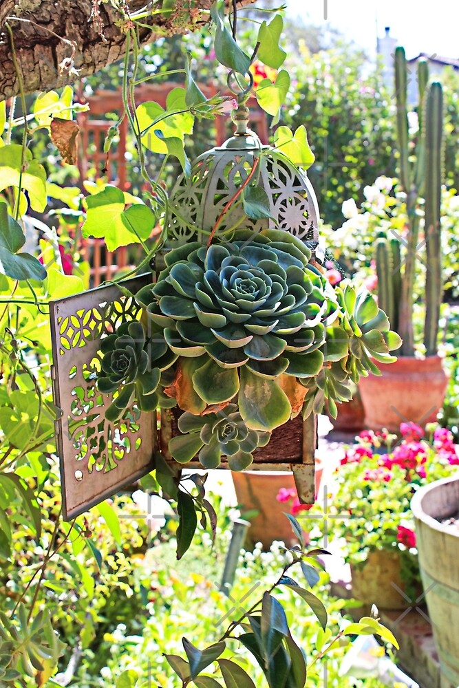 Succulents in the Garden by Martha Sherman
