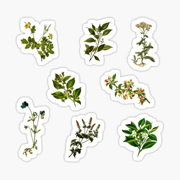 Vintage Botanical pack 2 Sticker