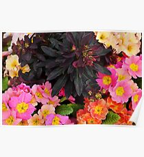 Spring Window Box Arrangement  Poster