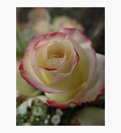 The Rose Fotodruck
