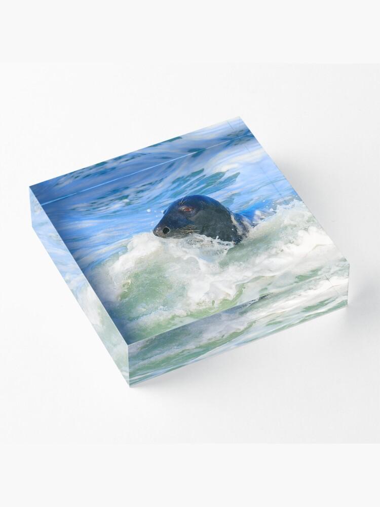 Alternate view of Grey Seal (Halichoerus grypus) Acrylic Block