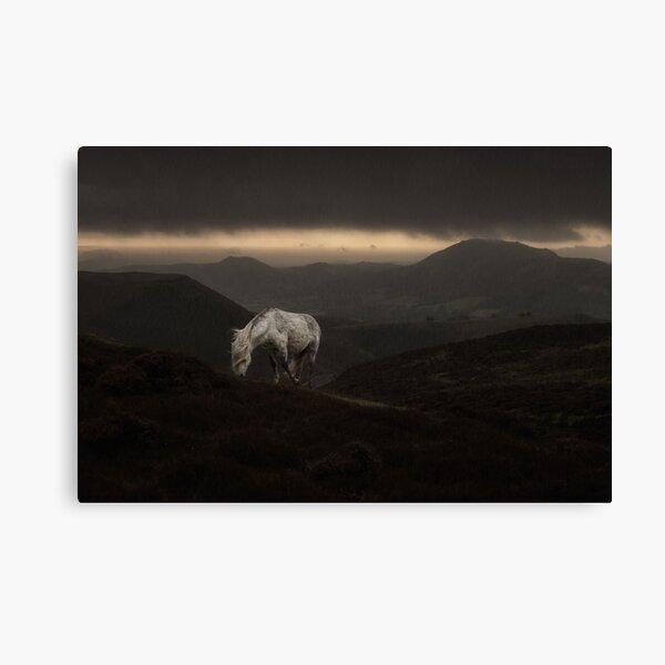 Wild White Horse Of The Shropshire Hills Canvas Print
