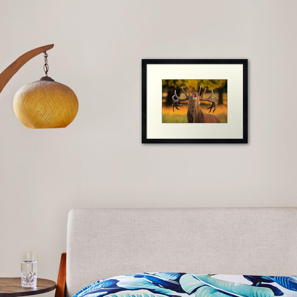 Red Deer Stag (Cervus elaphus) Framed Art Print