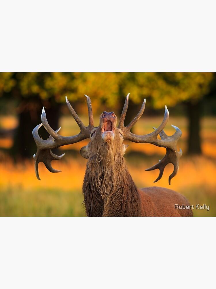Red Deer Stag (Cervus elaphus) by RobKellyPhoto